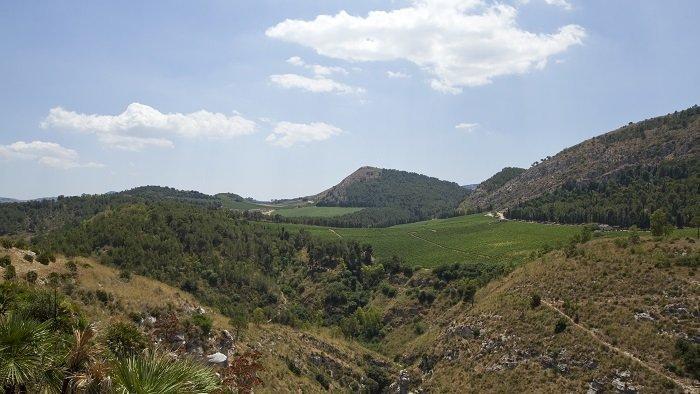 Vineyards and rolling hills around Calatafimi